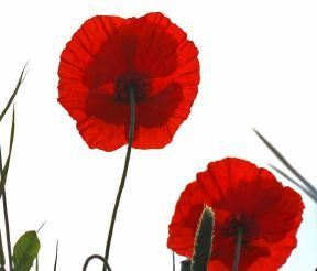 Schola Benedicti Concert -to mark Remembrance Sunday and the month of the Holy Souls