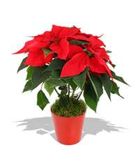 Christmas Flower & Decoration Offering
