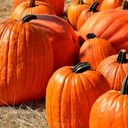 Young Adults, Families: Sign up for October 24 fall festival