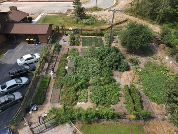 What's growing on? Garden on track to harvest over 4,000 pound of food this year