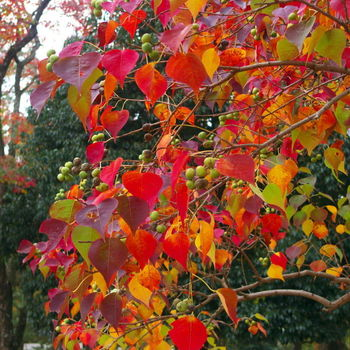 Where is autumn in your Spiritual Life?