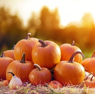 Halloween Pumpkin Patch Party for the Children - October 24, 2:00 PM to 3:30 PM