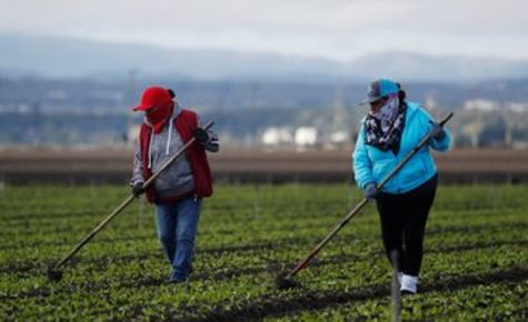 Concerns mount over lack of COVID-19 protections for California farmworkers