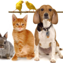Blessing of Animals October 1