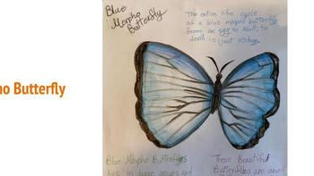 Insect Drawings by Fifth Grade Students at OLL