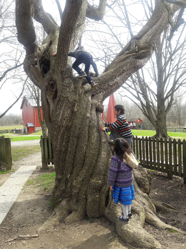 Children climbing and old tree