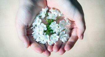 Hands holding little white flowers
