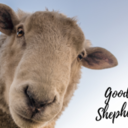 Good Shepherd - Logo Contest | Concurso de Logotipo
