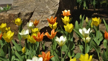 Spring clean-up and flower planting