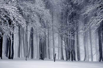 Aging With Grace ~ Winter Safety Tips