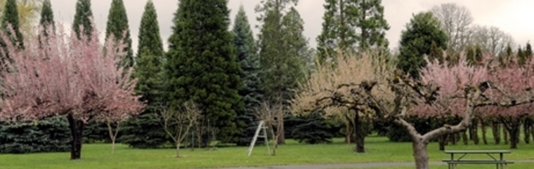 The beautiful grounds at Our Lady of Peace Retreat in the Spring in Beaverton Oregon