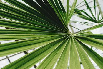 Palm Sunday Info