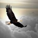 EAGLES KNOW WHEN A STORM APPROACHES
