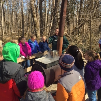 Gr. 3 Maple Sugaring