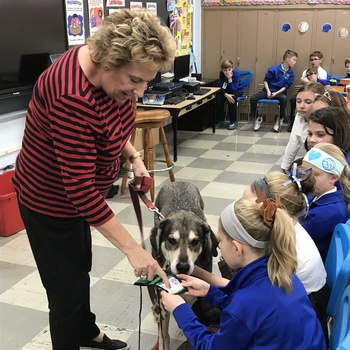 Lincoln, Mrs. Wolf's Therapy Dog, Visits 4th Grade