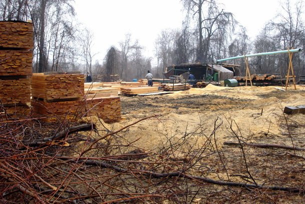 logging of trees on St. Joseph Church property