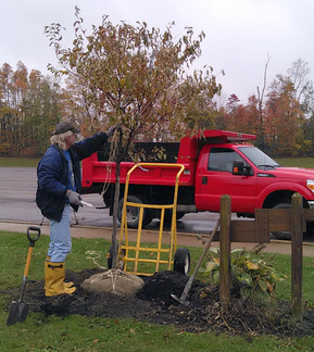 Bill Fetsko plants tree in memory of Bernice Heritage