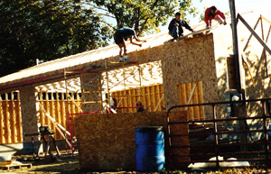 Ox barn raising