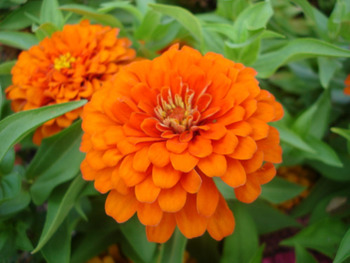 WOS Plant and Flower Sale