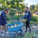 Students help harvest plentiful parish garden at Saints Rose and Clement