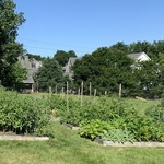 Parishes grow, deliver food