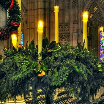 Help Decorate the Church for Christmas
