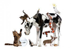 """""""Blessing of Pets"""" on the feast day of St. Francis"""